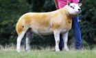 Texel shearling ram Caron Dynamite sold for 32,000gn.