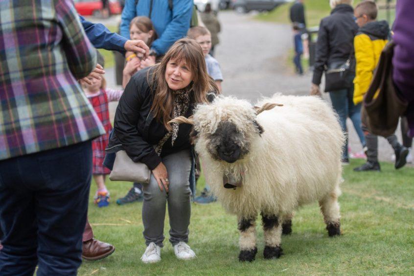 Elfie the Valais Blacknose sheep was in demand for photos. Photo: Michal Wachucik/Abermedia