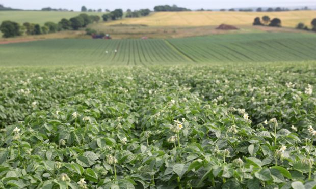 The seed potato field at the centre of trials.