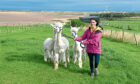 Gayle Ritchie meets the Highland Alpacas near Balmedie and takes them on a trek.