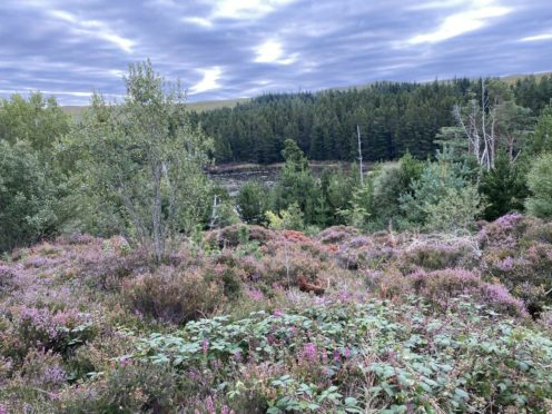 Laide and Aultbea Community Woodland covers more than 85 hectares.