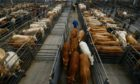 The number of livestock sold through ANM in the first six months of the year was up by almost 15% on 2020.