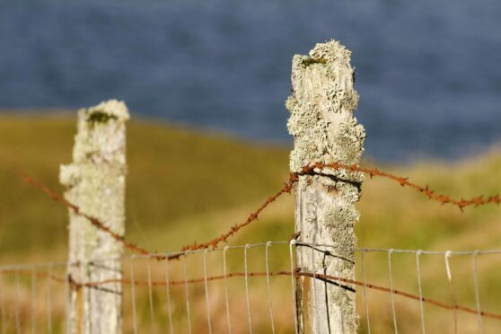 HELPING HAND: More must be done by the Crofting Commission to highlight the best options available to those passed a crofting tenancy.