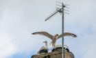 Gulls taking over the rooftops.