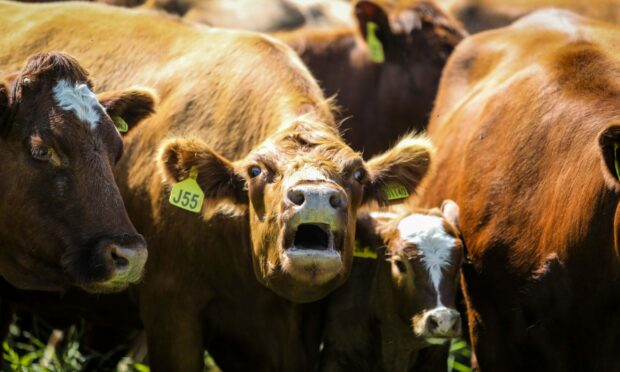 The toolkit aims to bust myths about red meat production in the UK.