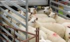 IAAS is encouraging donations of sheep to its Lamb Bank scheme.