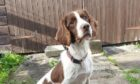 Buster helped police officers find a small amount of drugs in Moray.