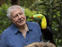 Sir David Attenborough will present Life In Colour (PA)