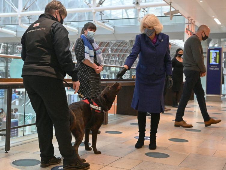 The Duchess of Cornwall pats a dog taking part in a demonstration by the charity Medical Detection Dogs (Justin Tallis/PA)