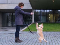 A dog being trained (Ana Catarina Vieira de Castro/University of Porto)
