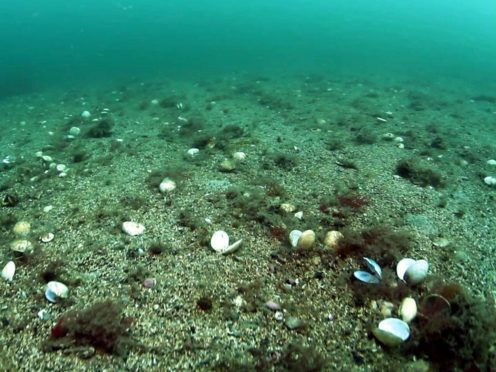 Seabeds are damaged by bottom trawling fishing, the Marine Conservation Society says (Howard Wood/PA)