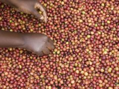 Fairtrade helps coffee farmers get paid fairly for labour (Simon Rawles/PA)