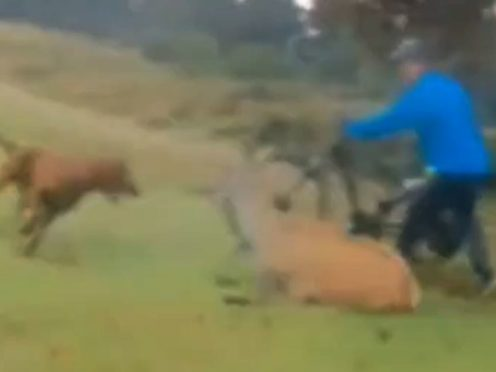 Footage of the attack on a deer in Richmond Park in October (Met Police/PA)