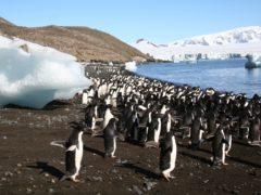Network of marine protected areas 'could help safeguard Antarctic penguins' (Heather Lynch/Stony Brook University/PA)