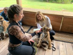 It is easier to buy a tiger than adopt a dog in some parts of the US, investigative journalist Mariana van Zeller has said (National Geographic/Muck Media/PA)
