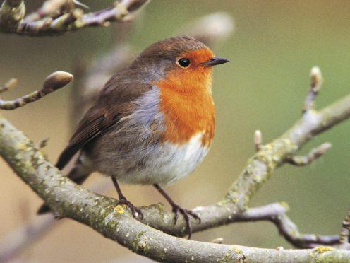 Rebecca Bailey hangs up homemade bird food in her garden in Bristol (Eleanor Bentall/RSPB/PA)
