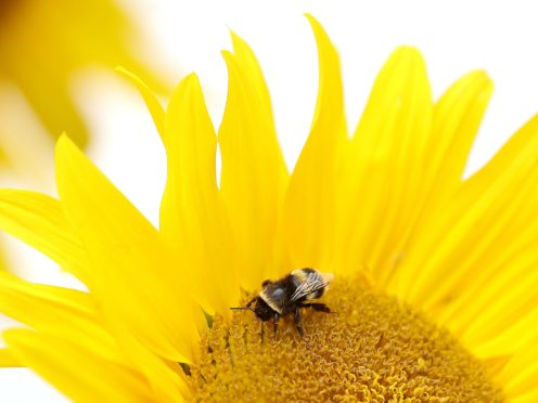 Home gardens are the biggest source of food for insects including bees (Martin Rickett/PA)
