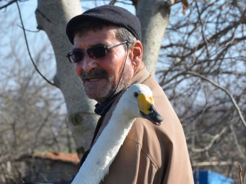 Recep Mirzan with Garip the swan (Ergin Yildiz/AP)