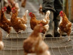 Bird flu has been detected at a site in Staffordshire (Chris Radburn/PA)