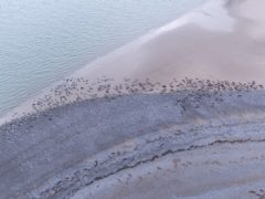 A record number of seals have been recorded at the South Walney Nature Reserve in Barrow, Cumbria, this year (Cumbria Wildlife Trust/PA)