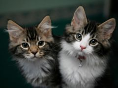 Pet insurance claims for cats were at a record high in 2020, according to the Association of British Insurers (Nick Ansell/PA)