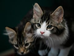 Spending on pets jumped at the start of 2021, Nationwide Building Society said (Nick Ansell/PA)