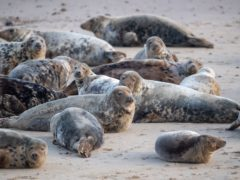 The Seal Alliance is urging people to give seals space in a campaign launched as the Easter weekend kicks off (Joe Giddens/PA)