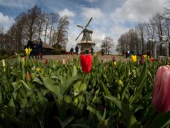 Far fewer visitors than normal are seen at the world-famous Keukenhof garden in Lisse, Netherlands (Peter Dejong/AP)