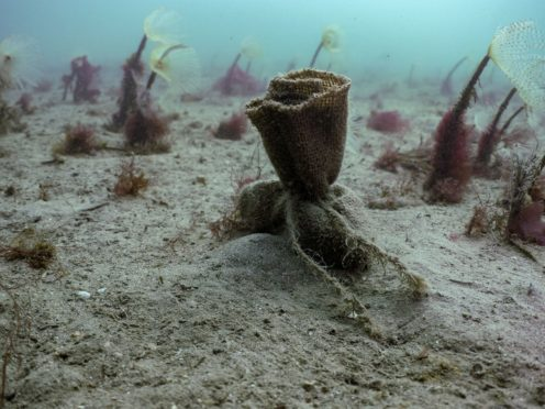 Seed bags sitting on the seabed (Ocean Conservation Trust/PA)