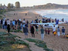 The light plane made an emergency landing on a beach in Sydney (Mark Baker/AP)