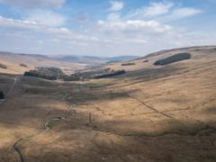 The plans would bring native woodland back to the bleak open landscape at Snaizeholme (James Reader/Front Row Films/WTML)
