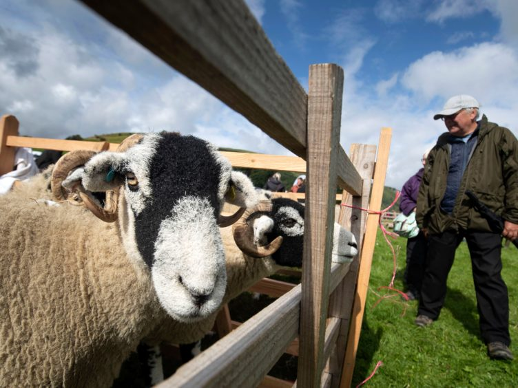 The details of the UK's first trade deal, which has drawn criticism from British farmers who fear being undercut, negotiated from scratch post-Brexit will be revealed on Tuesday (Danny Lawson/PA)