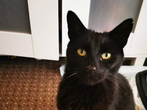 Sam, a nine-year-old black cat, went missing in 2014 (Cats Protection/PA)