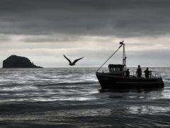 Scottish inshore fishermen at work off the east coast near Bass rock (David Cheskin/PA)