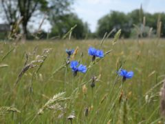A wildflower meadow was sown on the site late last summer (City of London Corporation/PA)