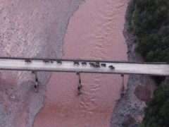 A herd of wandering elephants cross a river using a highway near Yuxi city, Yuanjiang county in southwestern China's Yunnan Province (Yunnan Provincial Command Center for the Safety and Monitoring of North Migrating Asian Elephants/AP)