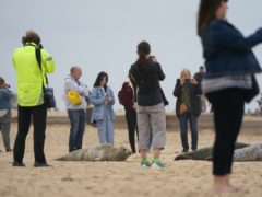 People taking photographs of seals on the beach at Horsey beach in Norfolk (Joe Giddens/ PA)