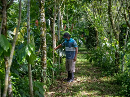 Pedro Garcia Rueda, a beneficiary of the Programme Environmental Services Payment in Costa Rica, showing how he's been able to harvest cocoa and plant trees to keep the forest in the same area (Emi Kondo/Earthshot Prize/PA)
