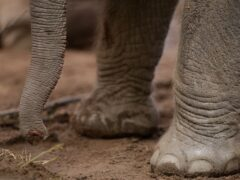 Aviva has detailed its most bizarre claims, including a circus elephant helping itself to food from a van (Dave Thompson/PA)