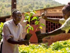 Coffee farmers in Kenya have benefitted from Fairtrade's Climate Academy (Fairtrade/PA)