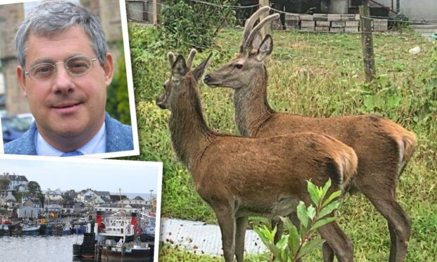Musical mogul Sir Cameron Mackintosh ordered to carry out deer cull at Nevis Estate