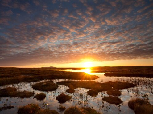 Pools and bog peatland pictured at dawn in Flow Country, Scotland (Mark Hamblin 2020 VISION/PA)