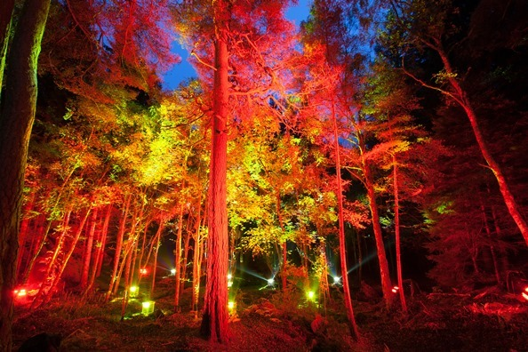 The Enchanted Forest. Photo by Graham Smith