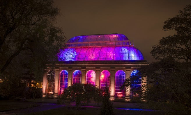 Night in The Garden at the Royal Botanics. Photo by Kenny Lam