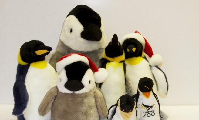 Edinburgh Zoo's other penguins!