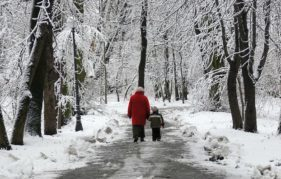 A magical walk among snow covered trees
