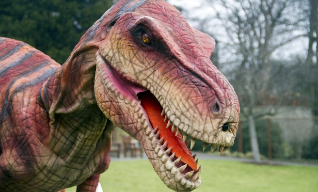 Velma The Velociraptor - the first dinosaur to arrive at Edinburgh Zoo.