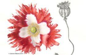 Victoria Cross Poppy by Jeanne Debons