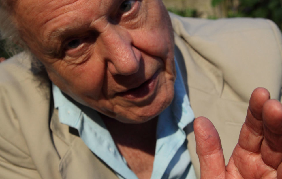 Sir David Attenborough tells us of his love for Scotland. Humble Bee Films.