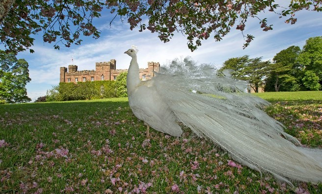 Scone Palace are proud as a peacock of their new award